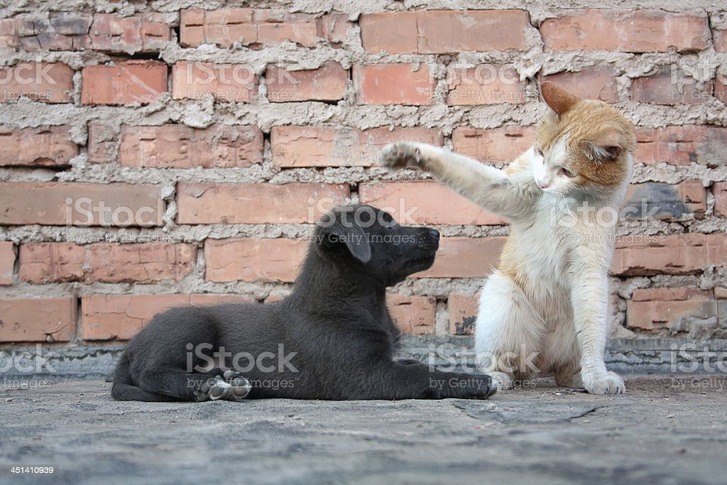Cat training a dog stock photo