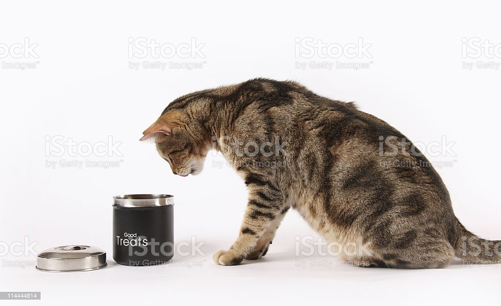 Cat Treats stock photo