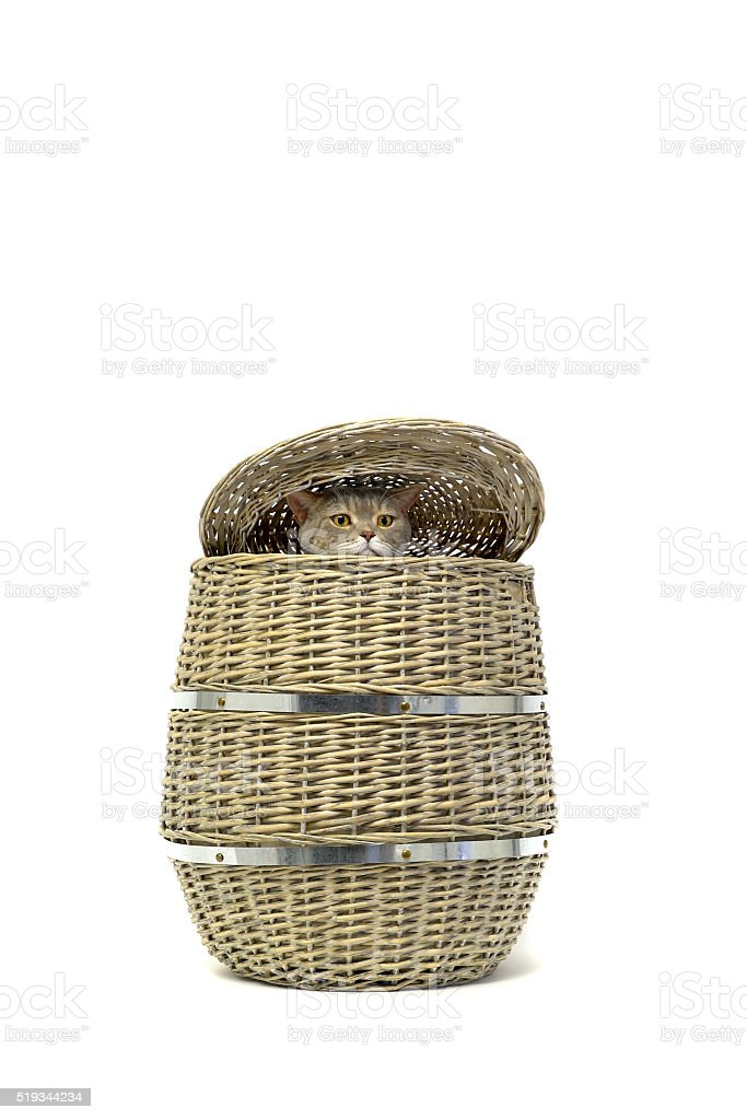 Cat trying to escape from the Empty wicker laundry basket stock photo