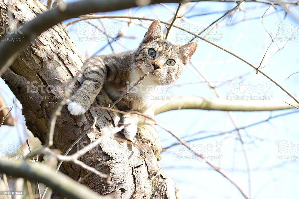 cat trying to hunt birds in a apple tree stock photo