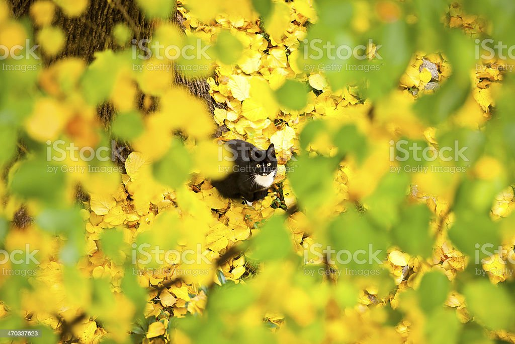 Cat under a lime tree in autumn royalty-free stock photo