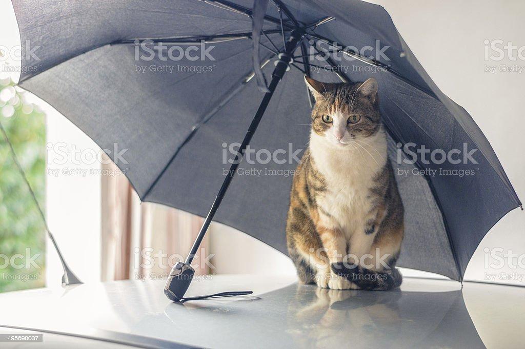 Cat under an umbrella stock photo
