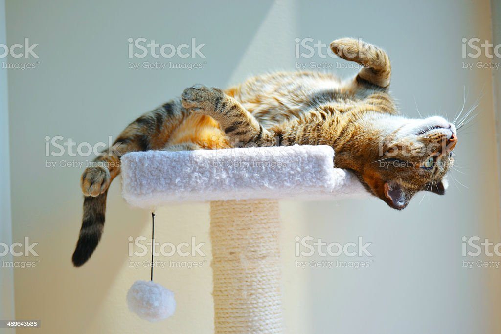Cat Upside Down stock photo