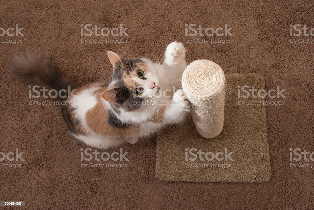 Cat using scratching post - overhead - landscape stock photo