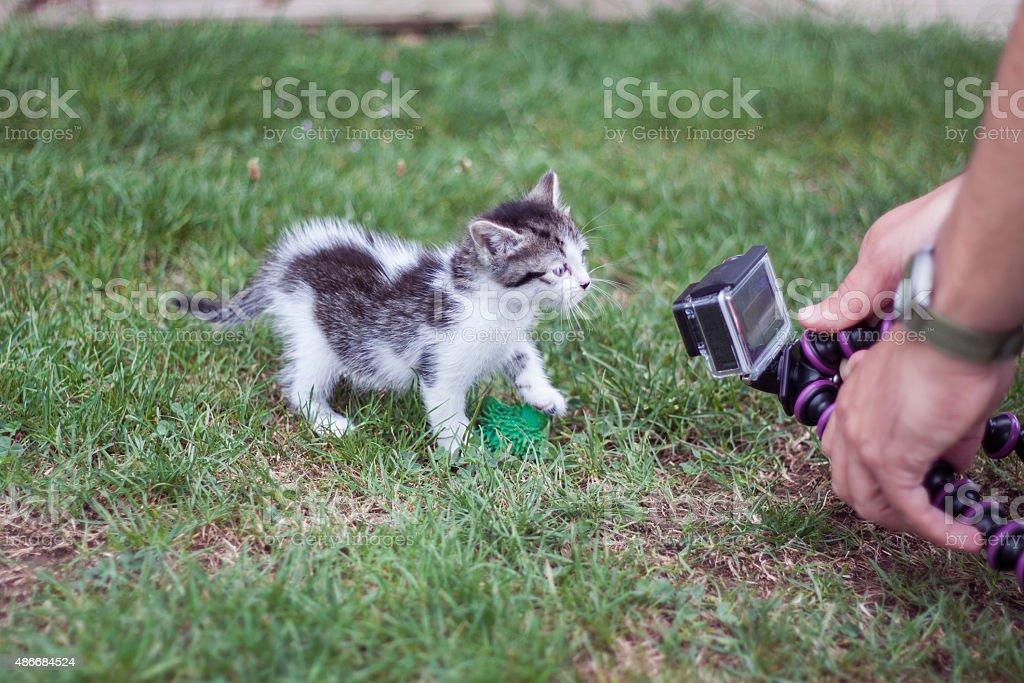 cat videocamera stock photo