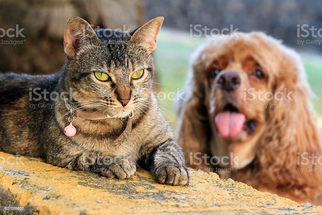 Cat vs stupid dog stock photo