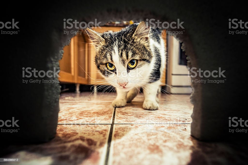 Кот ждёт мышку