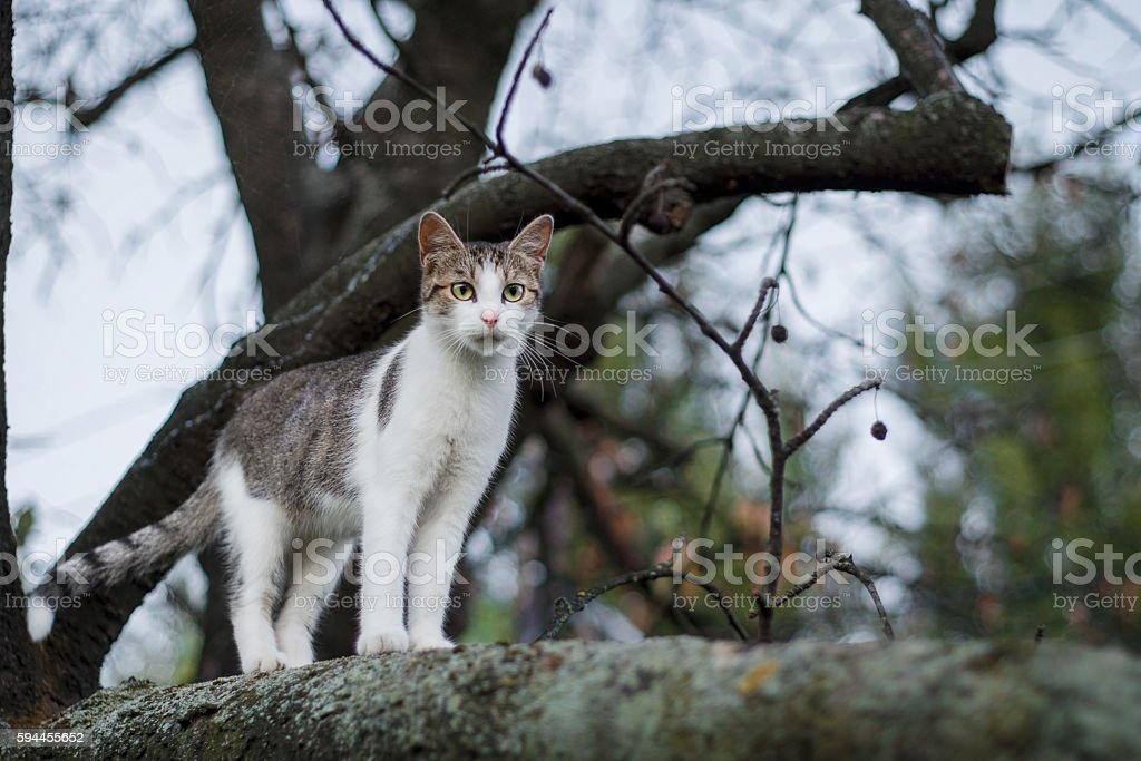 Cat walking and hunting on tree stock photo