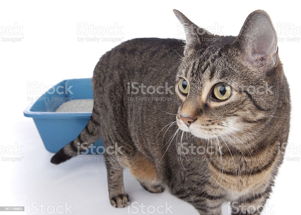 Cat Walking Away From Litterbox stock photo