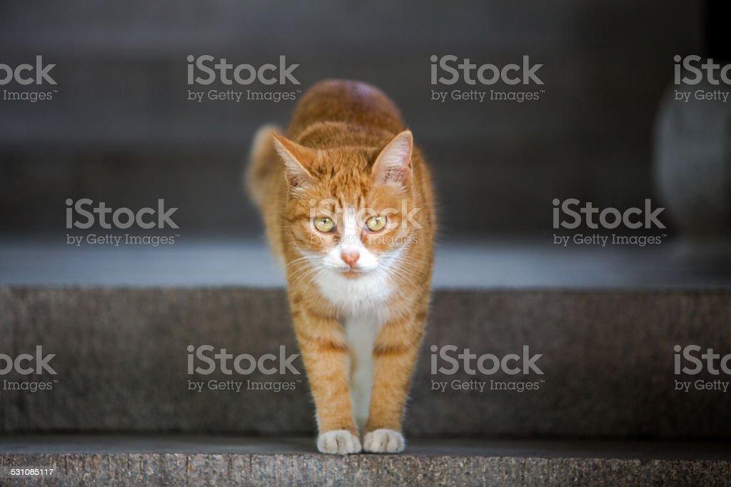 cat walking downstairs stock photo