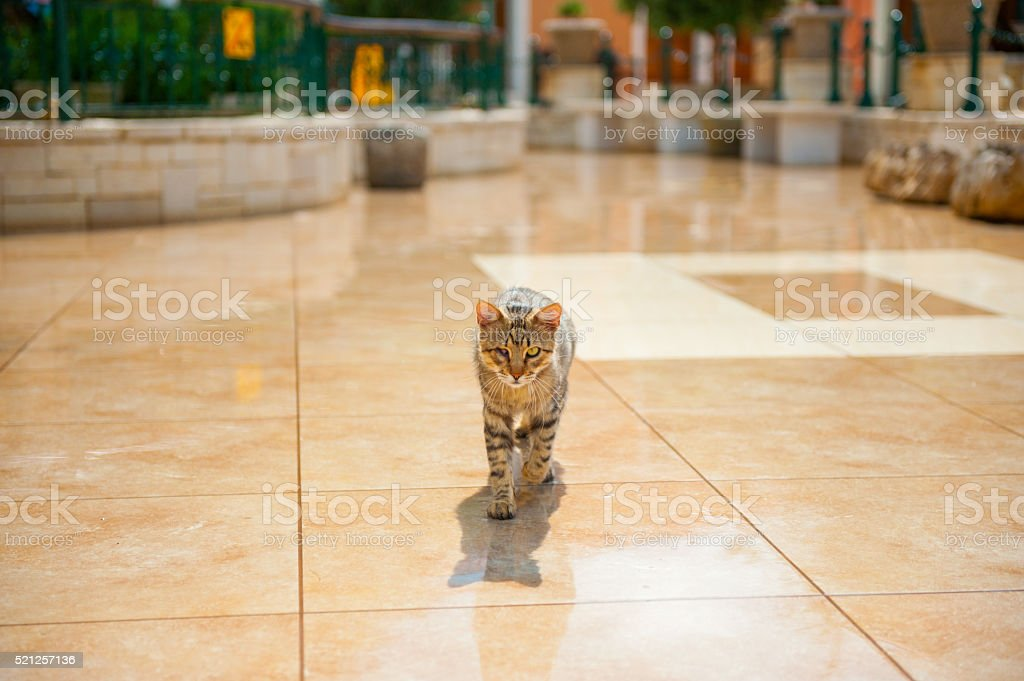 Cat walking towards me stock photo