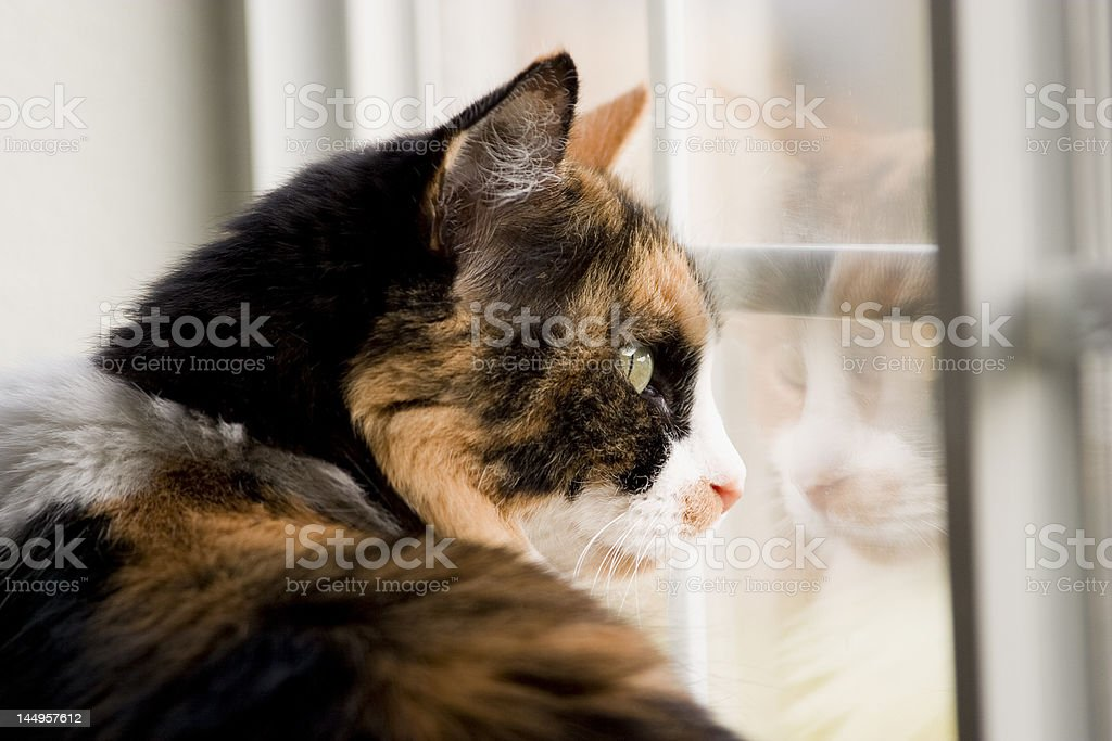 Cat wanting to be outside stock photo