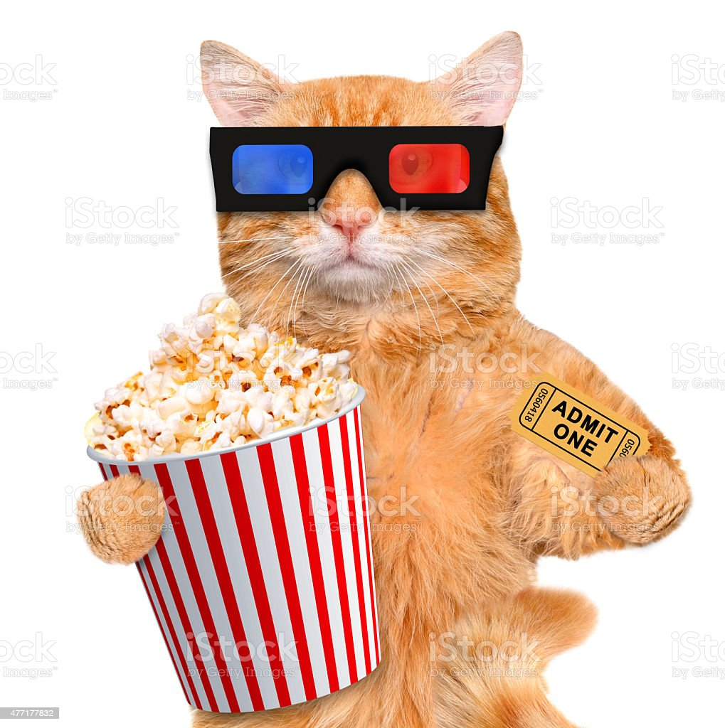 Cat watching a movie stock photo