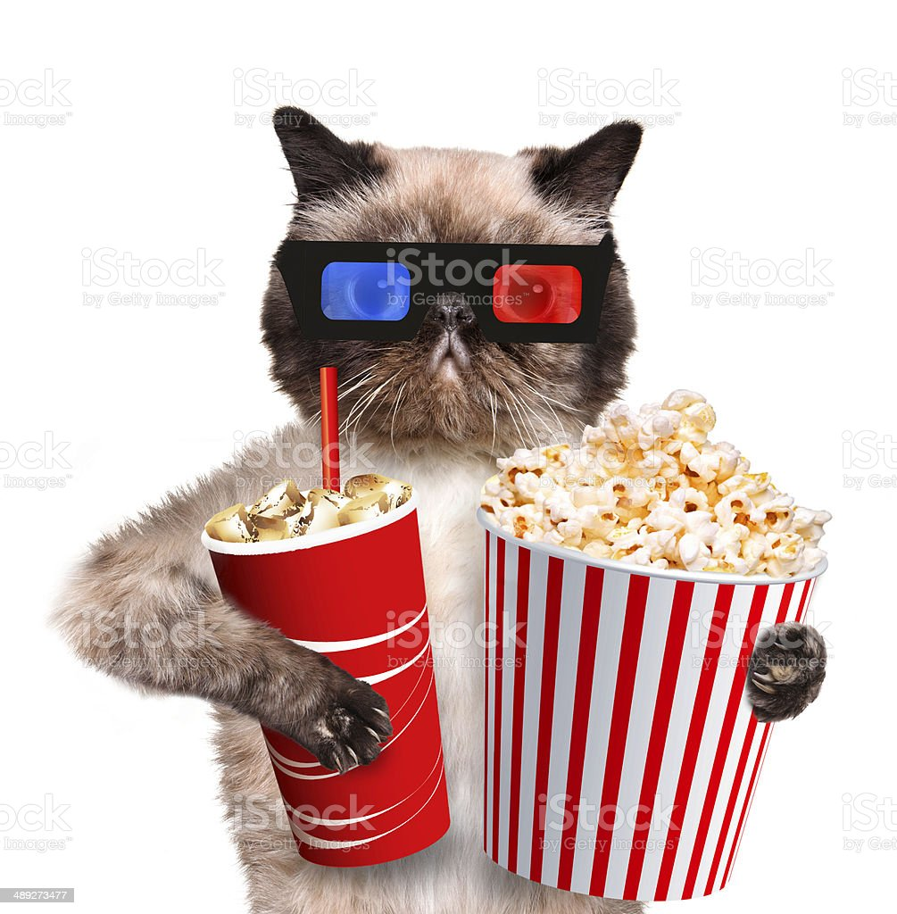 Cat watching a movie royalty-free stock photo