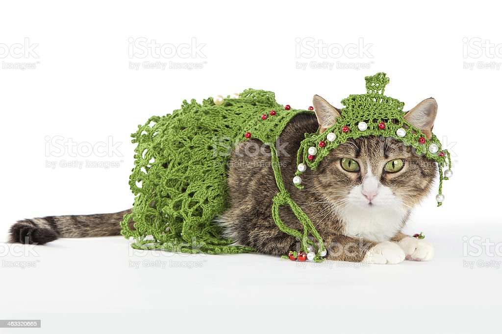Cat wearing a Christmas tree is isolated on white royalty-free stock photo