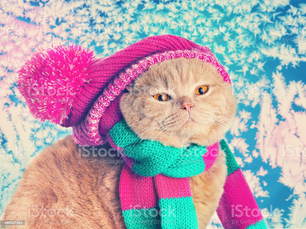 Cat wearing a pink knitting hat and stock photo