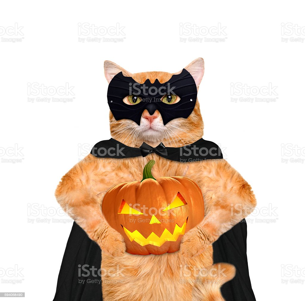 Cat wearing costume for halloween with a pumpkin. stock photo