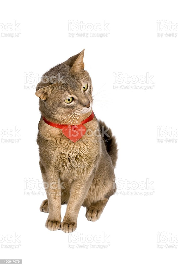 Cat wearing red heart on ribbon stock photo