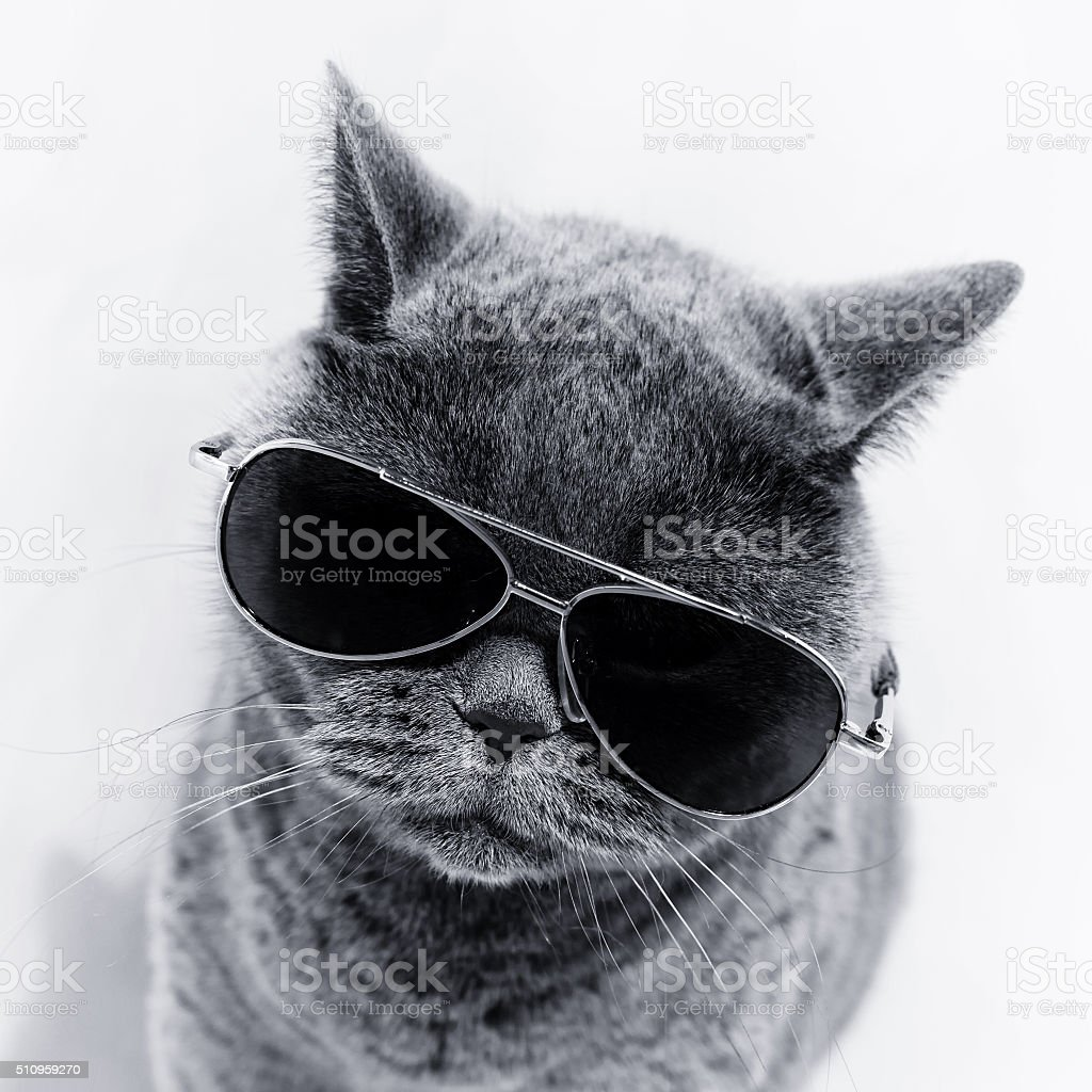 Cat wearing sunglasses stock photo