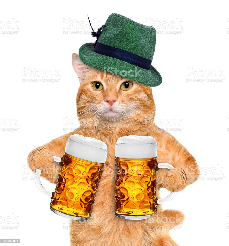 Cat with a beer mug. stock photo