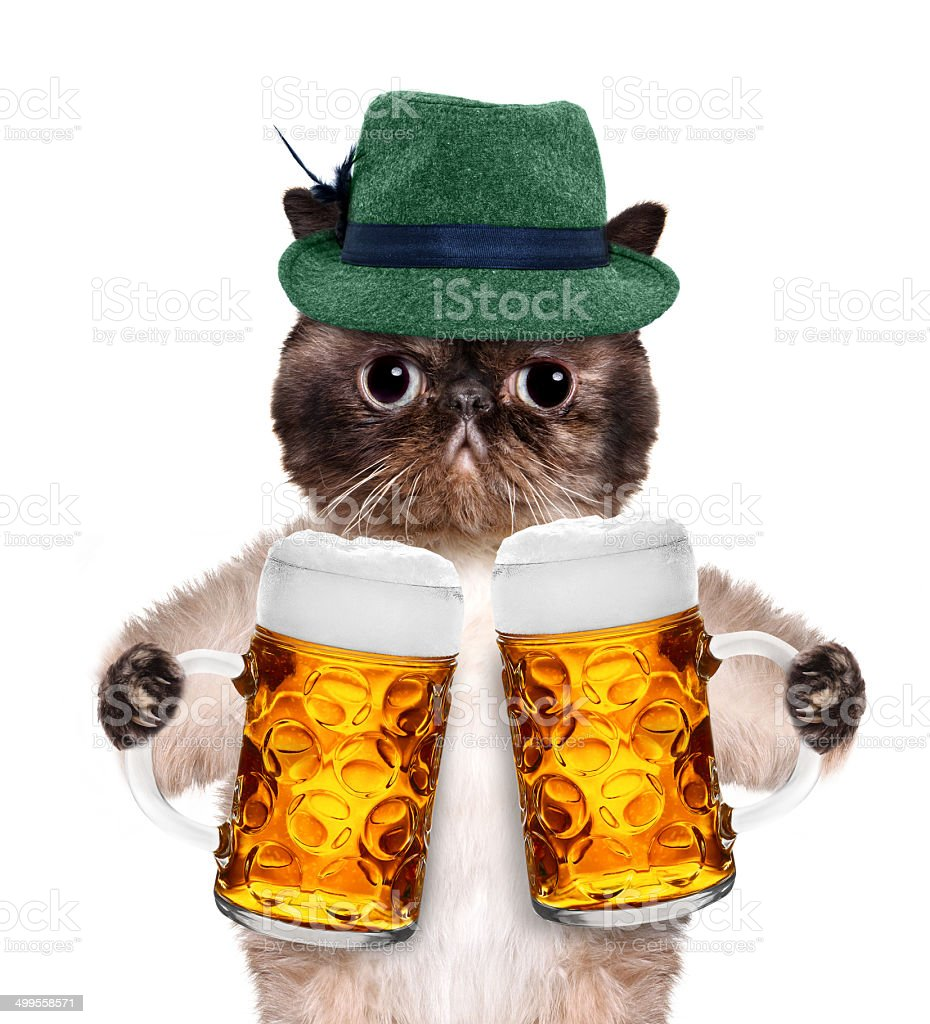 Cat with a beer mug stock photo