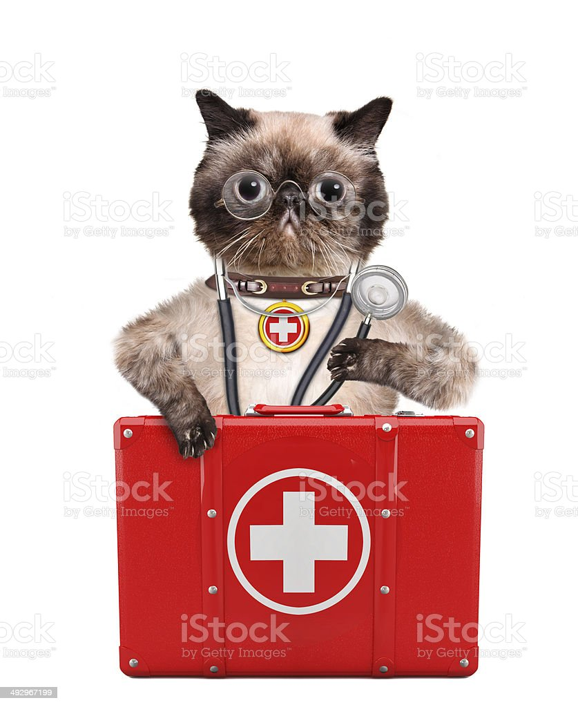 Cat with a first aid kit stock photo