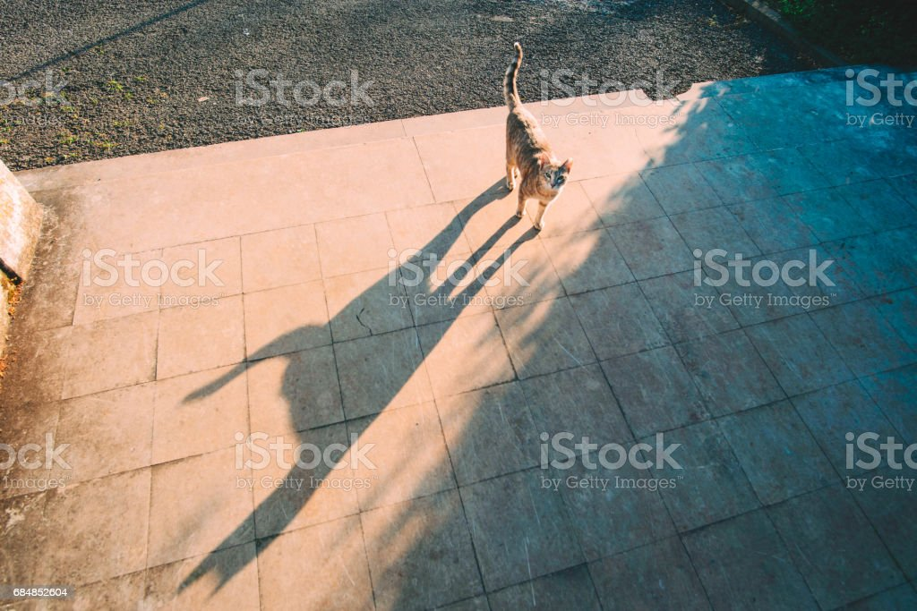 Cat with a long shadow stock photo