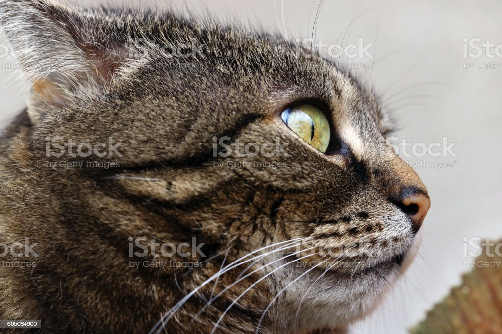 Cat with a strange, funny look stock photo