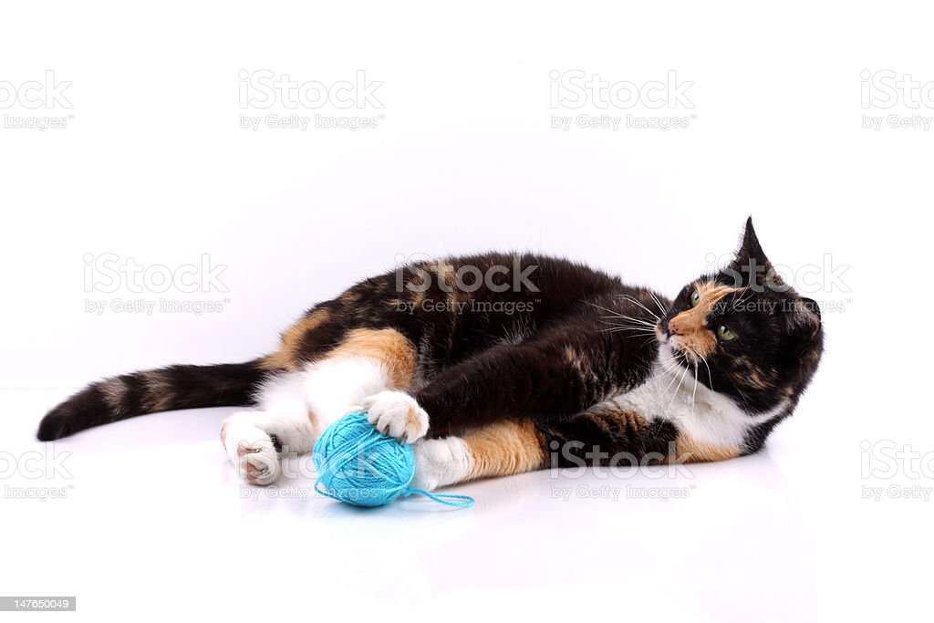 cat with a wool royalty-free stock photo