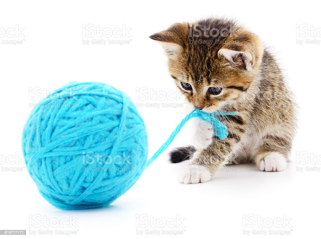 Cat with ball of yarn stock photo