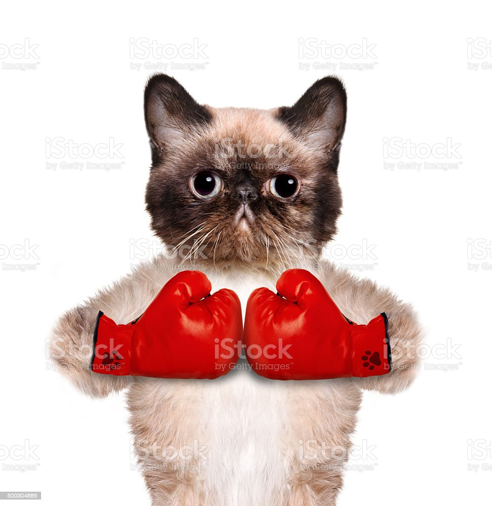 Cat with big red gloves. stock photo