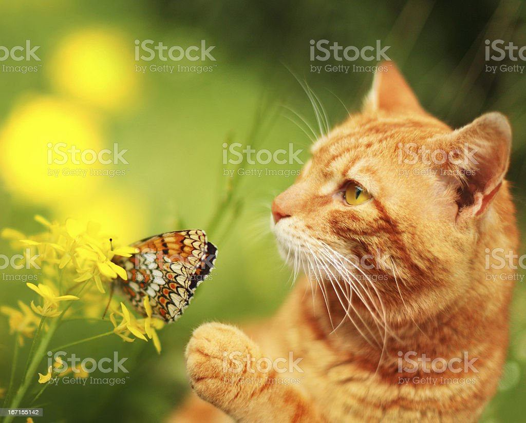 Cat with butterfly and flower royalty-free stock photo