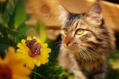 Cat with butterfly and flower stock photo