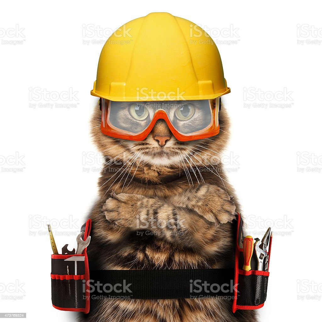 Cat with craftsman gear on white background stock photo