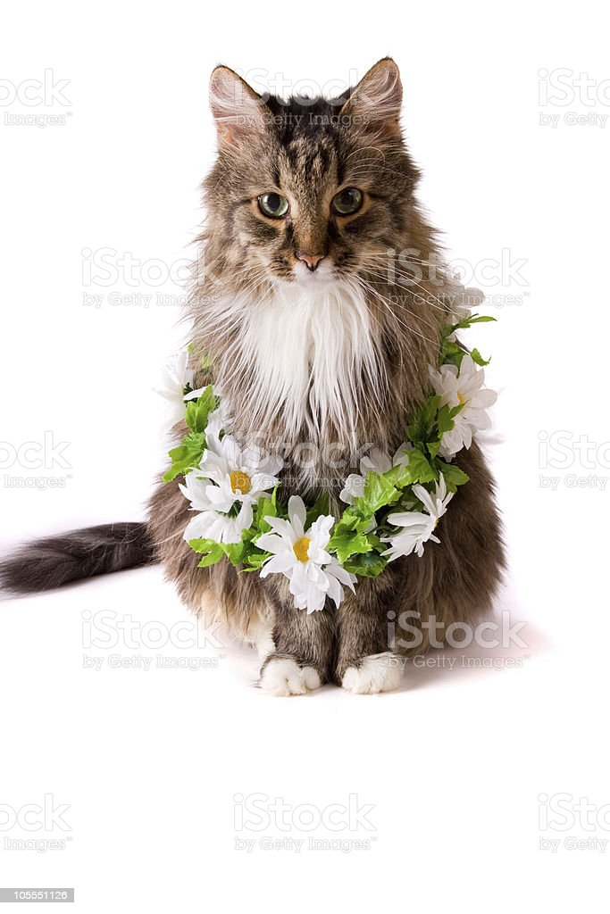 Cat with garland royalty-free stock photo
