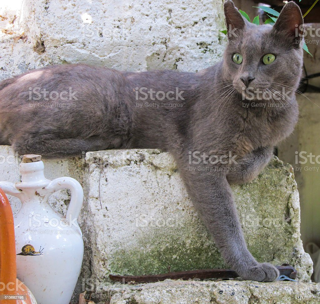 Cat with green eyes on the wall royalty-free stock photo