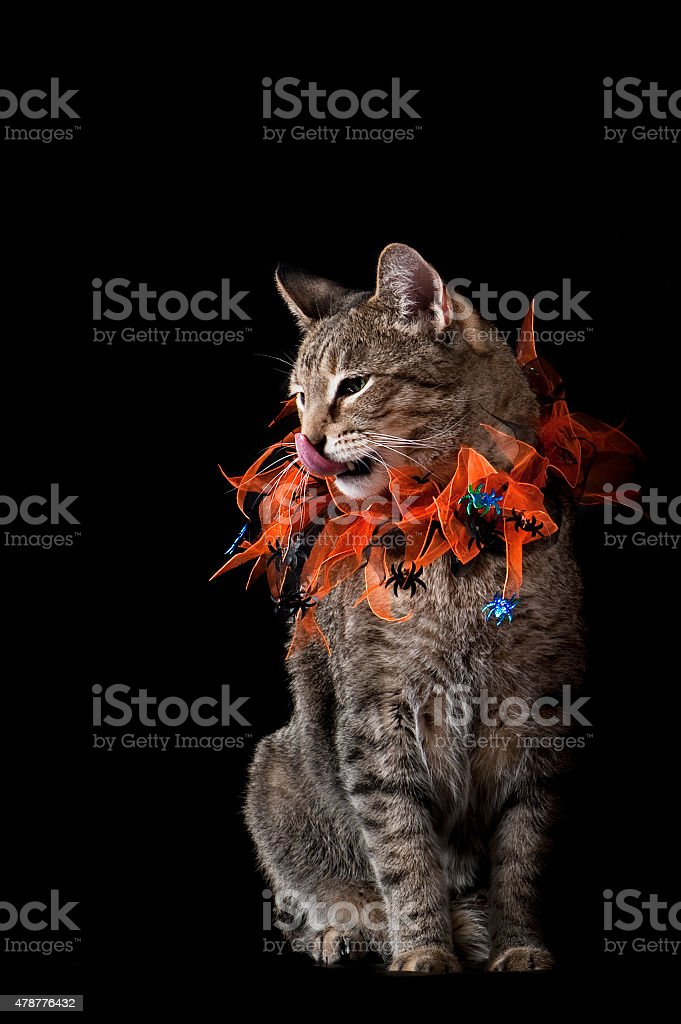 Cat with Halloween Collar Licking his Lips stock photo
