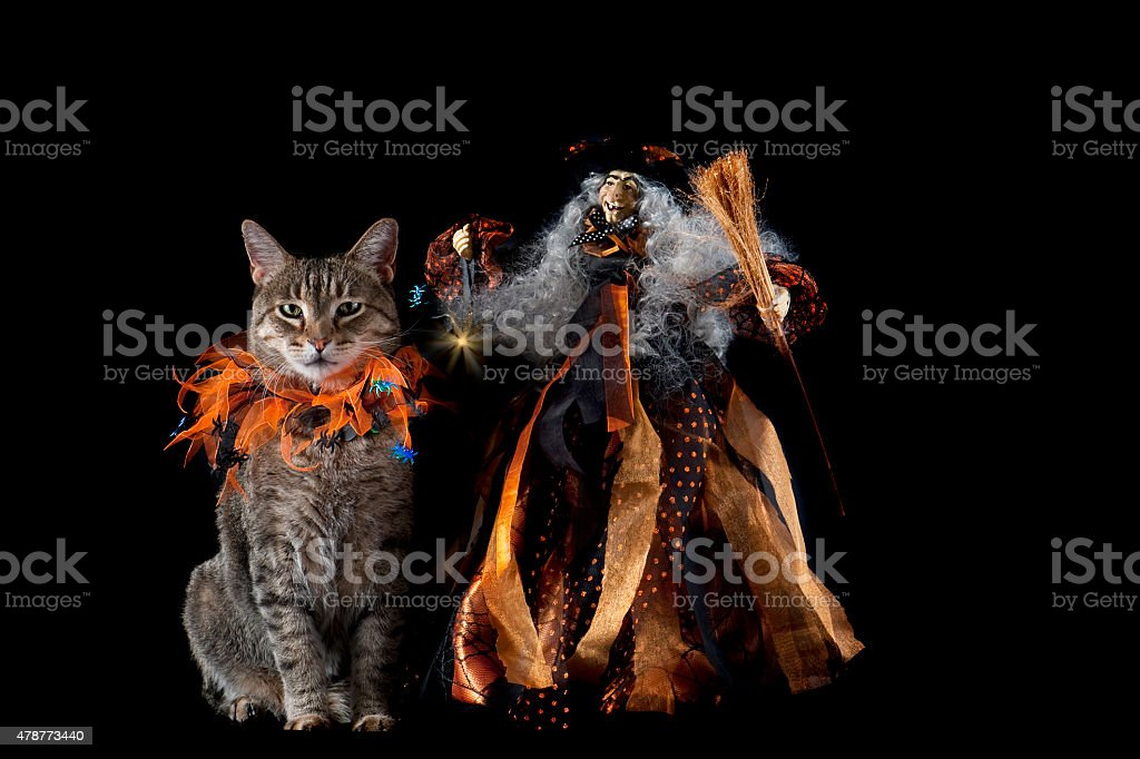 Cat with Halloween Collar Next to Smiling Witch stock photo