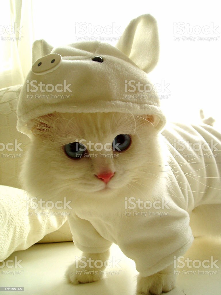 Cat with hat royalty-free stock photo