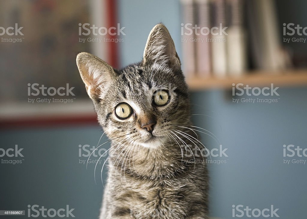 Cat with head tilted stock photo