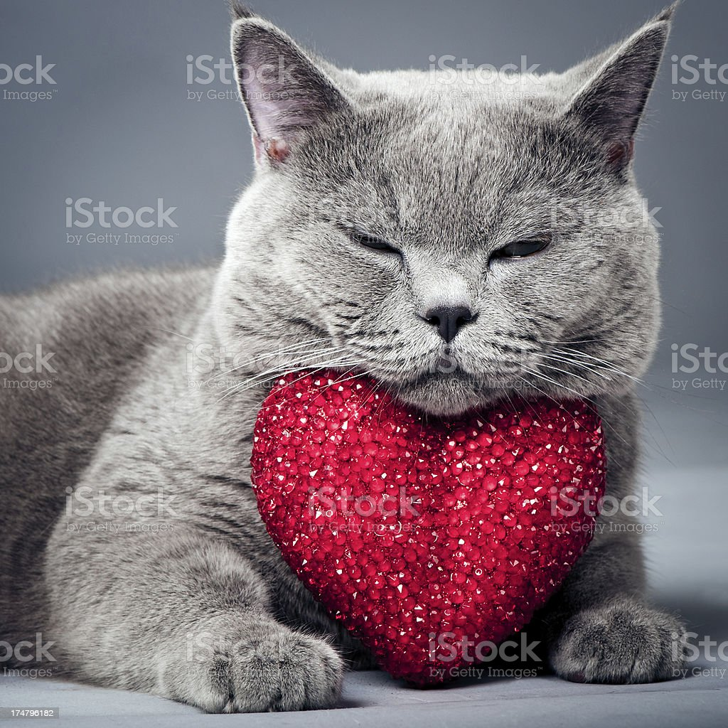 Cat with heart stock photo
