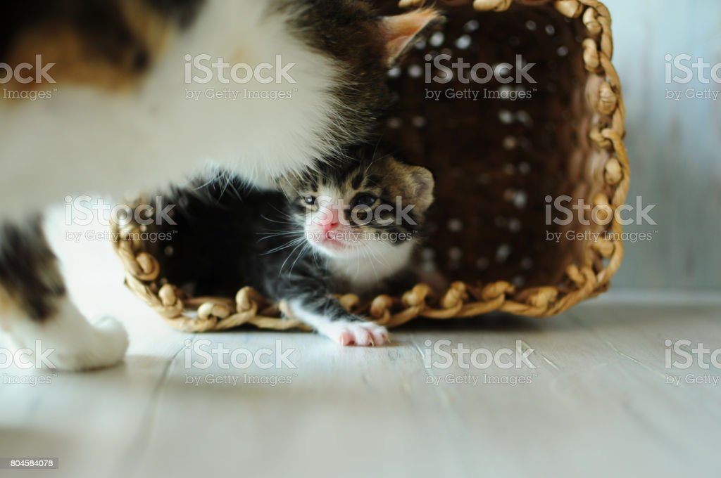 A cat with kittens. stock photo