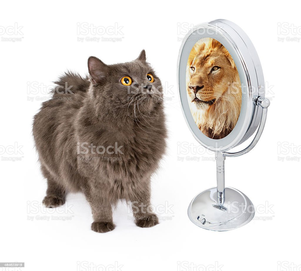Cat With Lion Reflection in Mirror stock photo