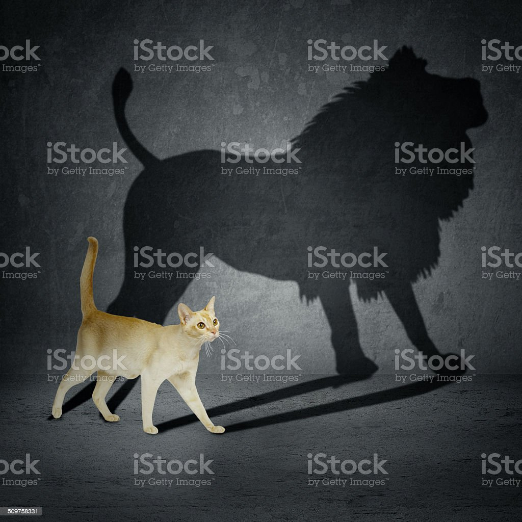 Cat with lion shadow stock photo
