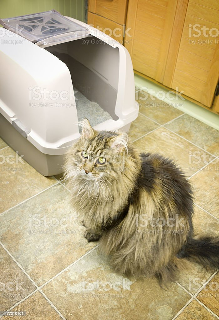 Cat With Litter Box. stock photo