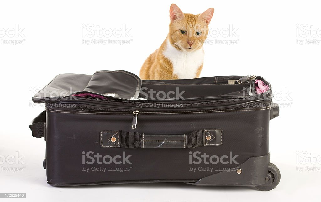 Cat with luggage royalty-free stock photo
