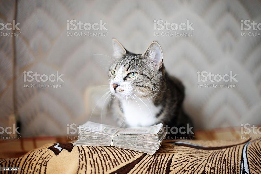 cat with money stock photo