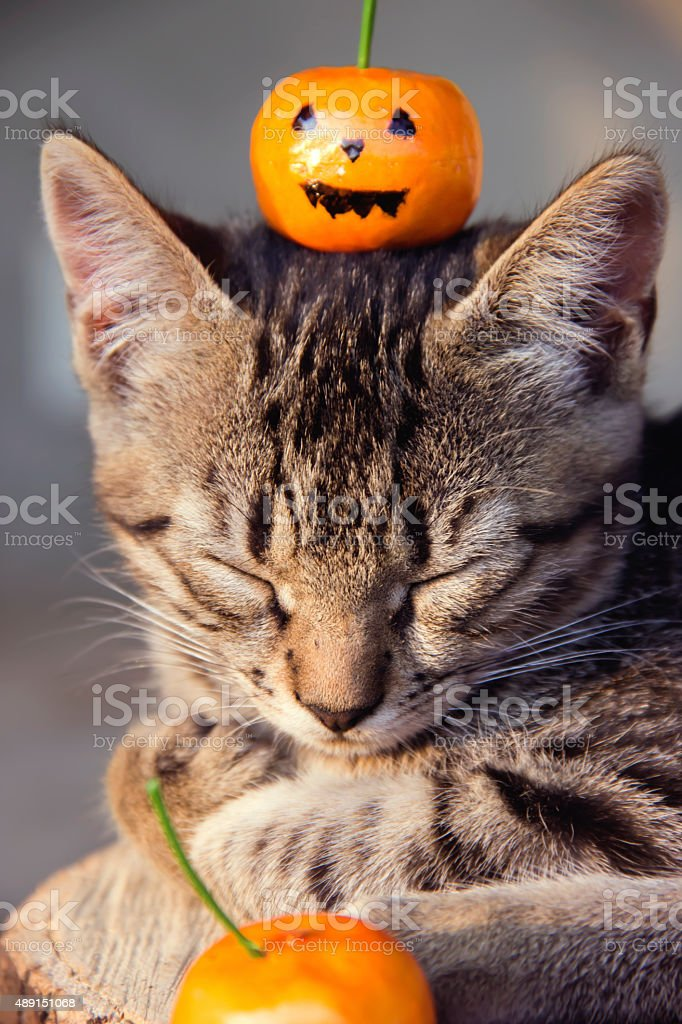 cat with pumpkin stock photo