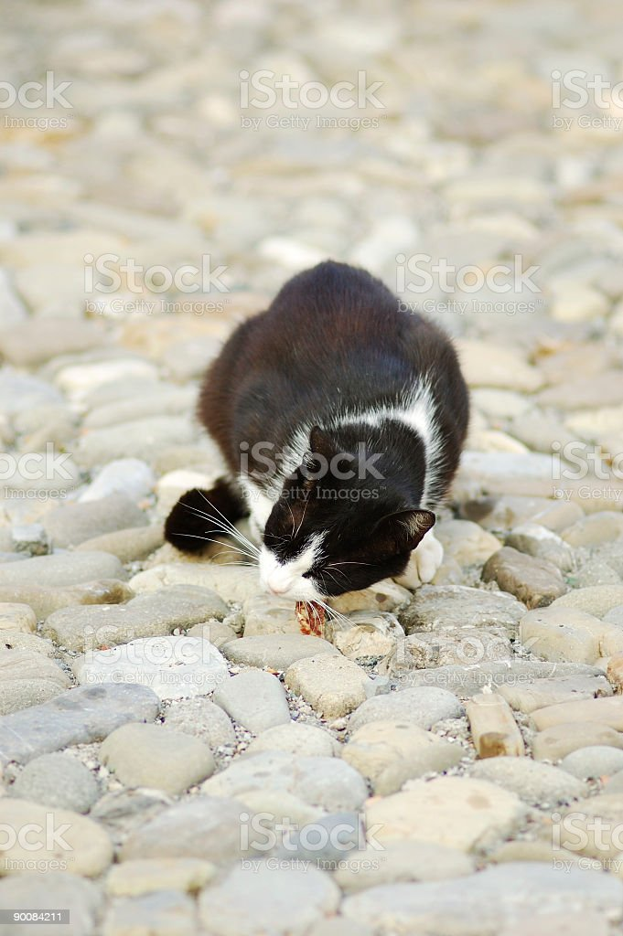 Cat with Salami royalty-free stock photo