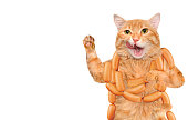 Cat with sausages on the white background .